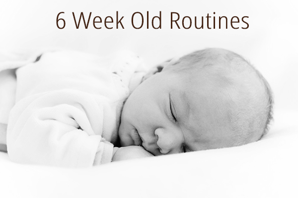 6 Week Old Routine / Schedule